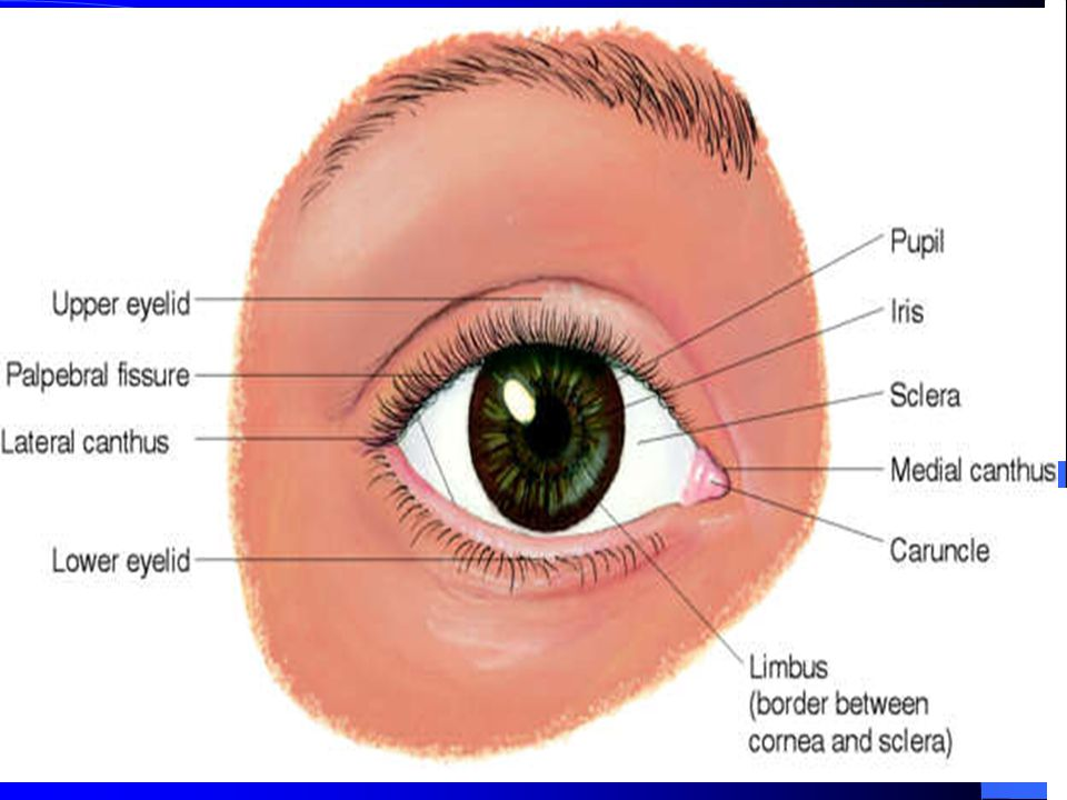 Images of anatomy of eye