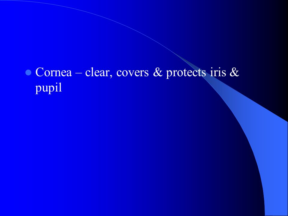 Cornea – clear, covers & protects iris & pupil