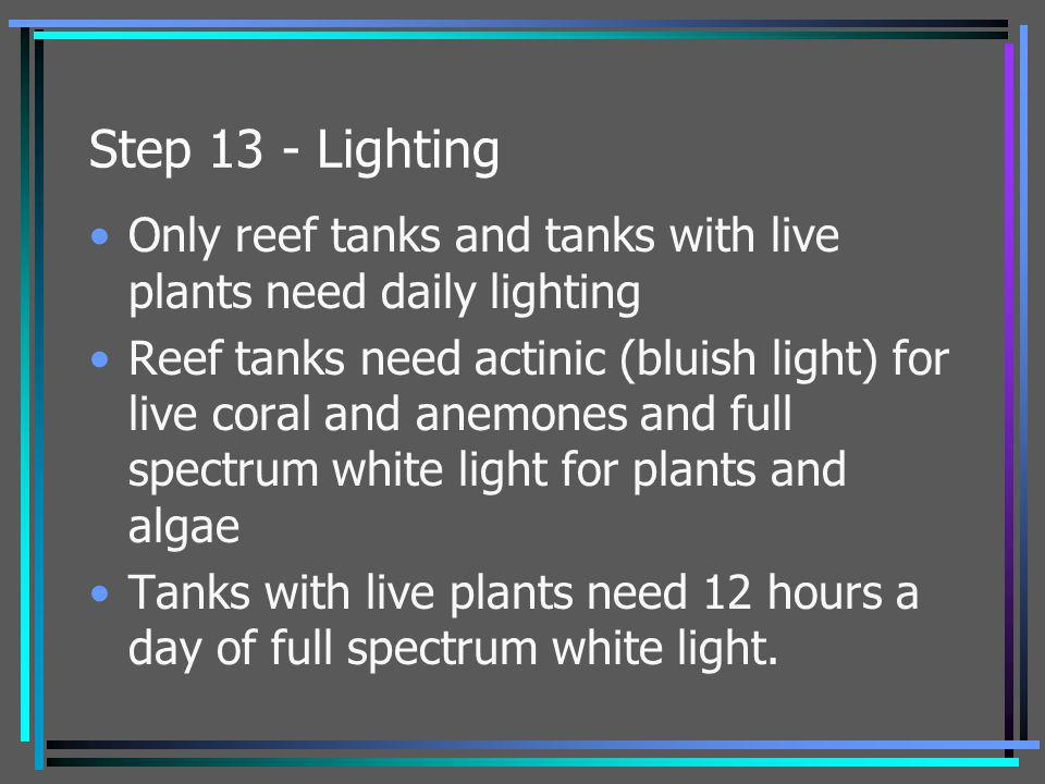 Step 13 - Lighting Only reef tanks and tanks with live plants need daily lighting.