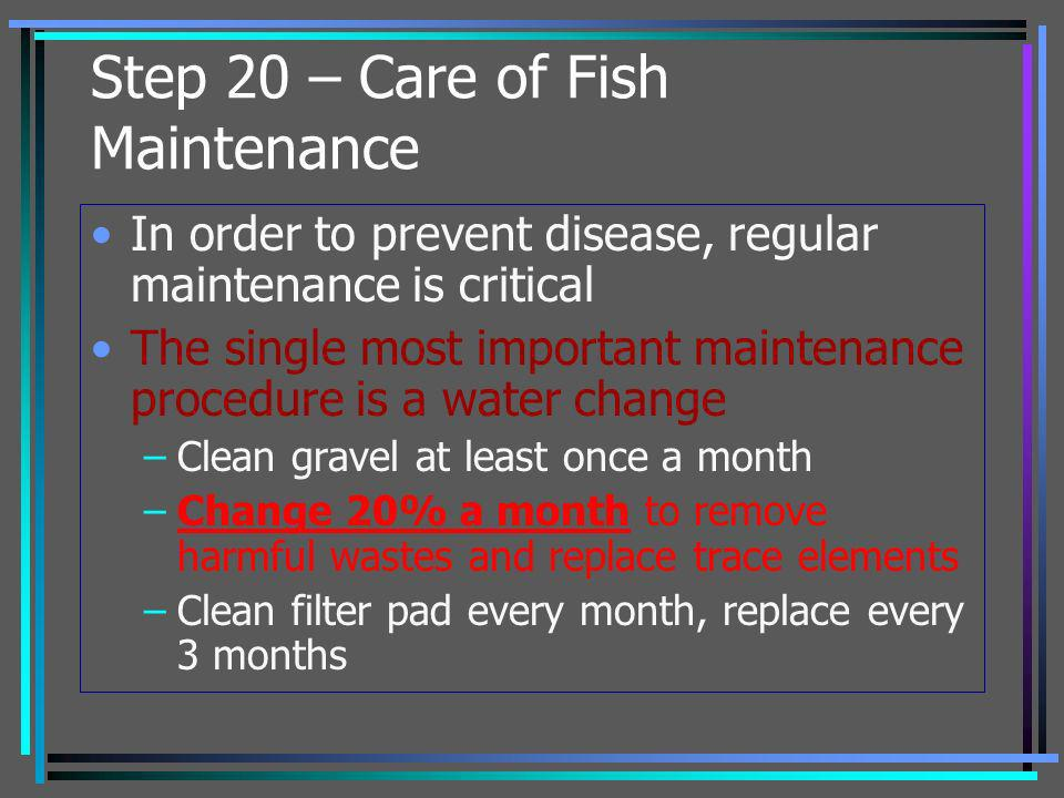 Step 20 – Care of Fish Maintenance