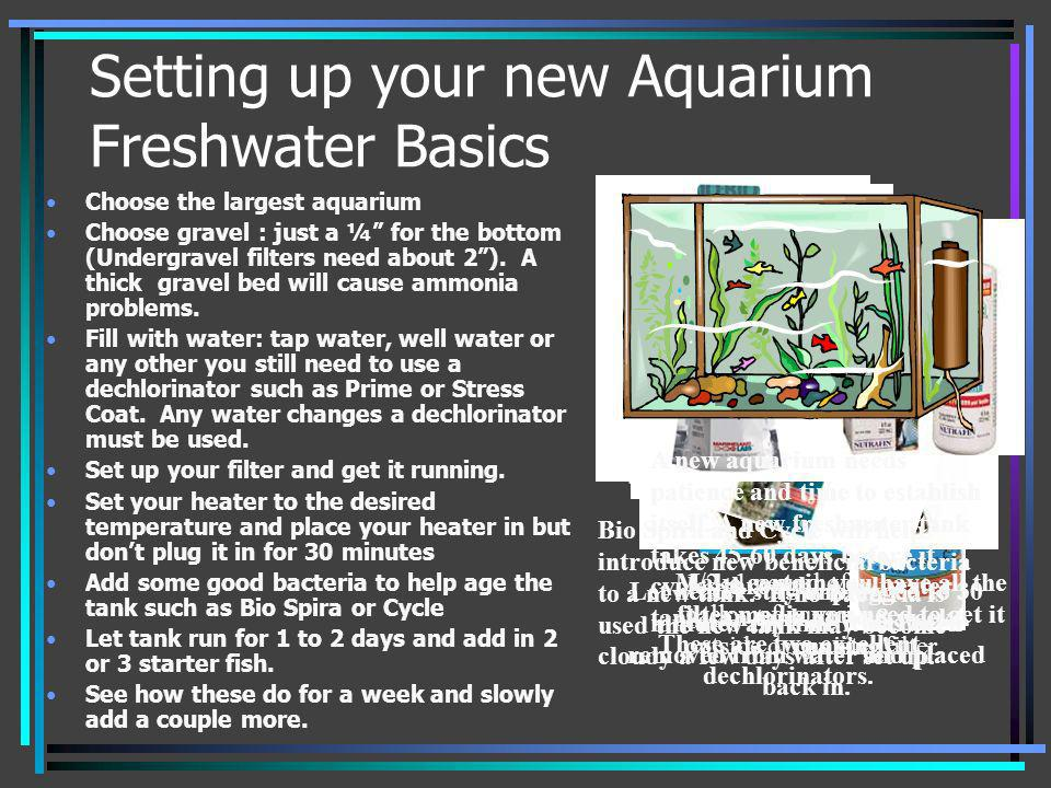 Setting up your new Aquarium Freshwater Basics