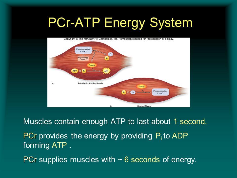 PCr-ATP Energy System Insert figure 11.8