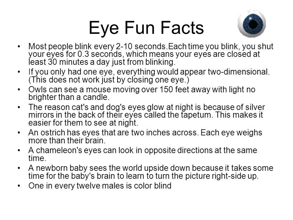 Eye Fun Facts