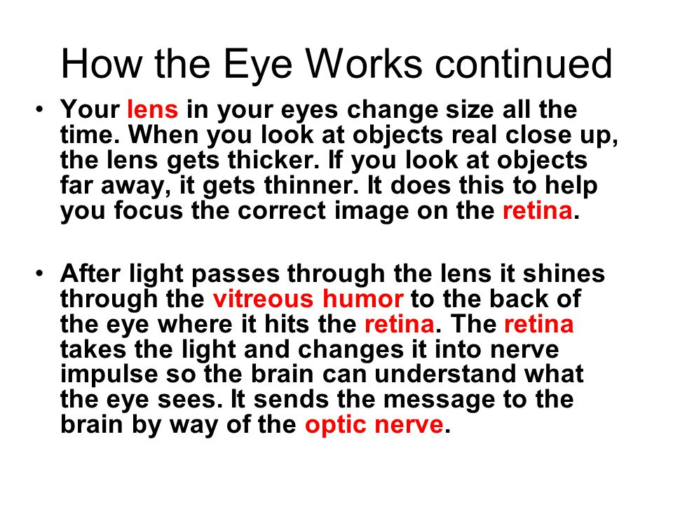 How the Eye Works continued