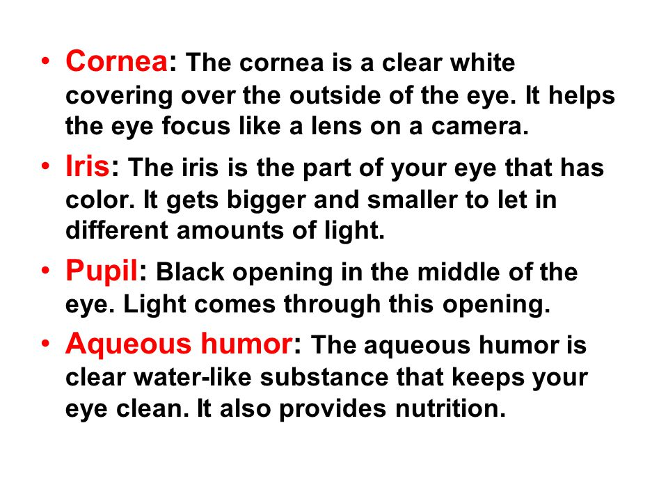 Cornea: The cornea is a clear white covering over the outside of the eye. It helps the eye focus like a lens on a camera.
