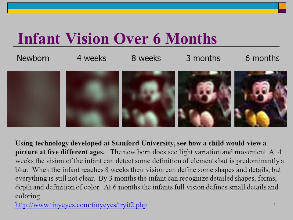 Infant Vision Over 6 Months