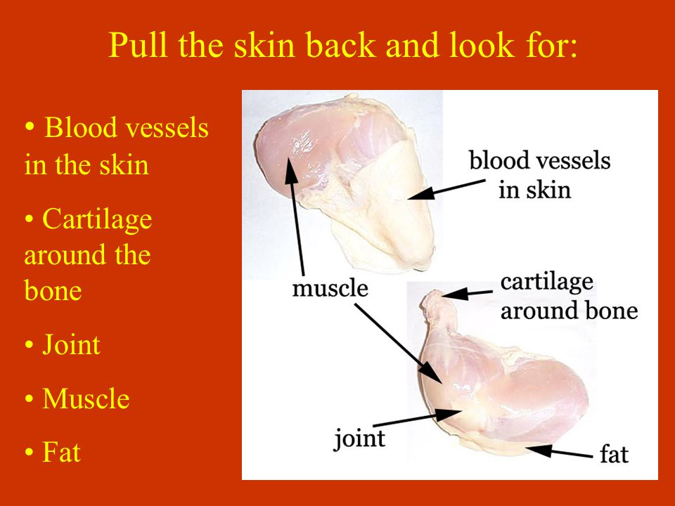 Pull the skin back and look for: