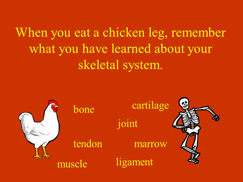 When you eat a chicken leg, remember what you have learned about your skeletal system.