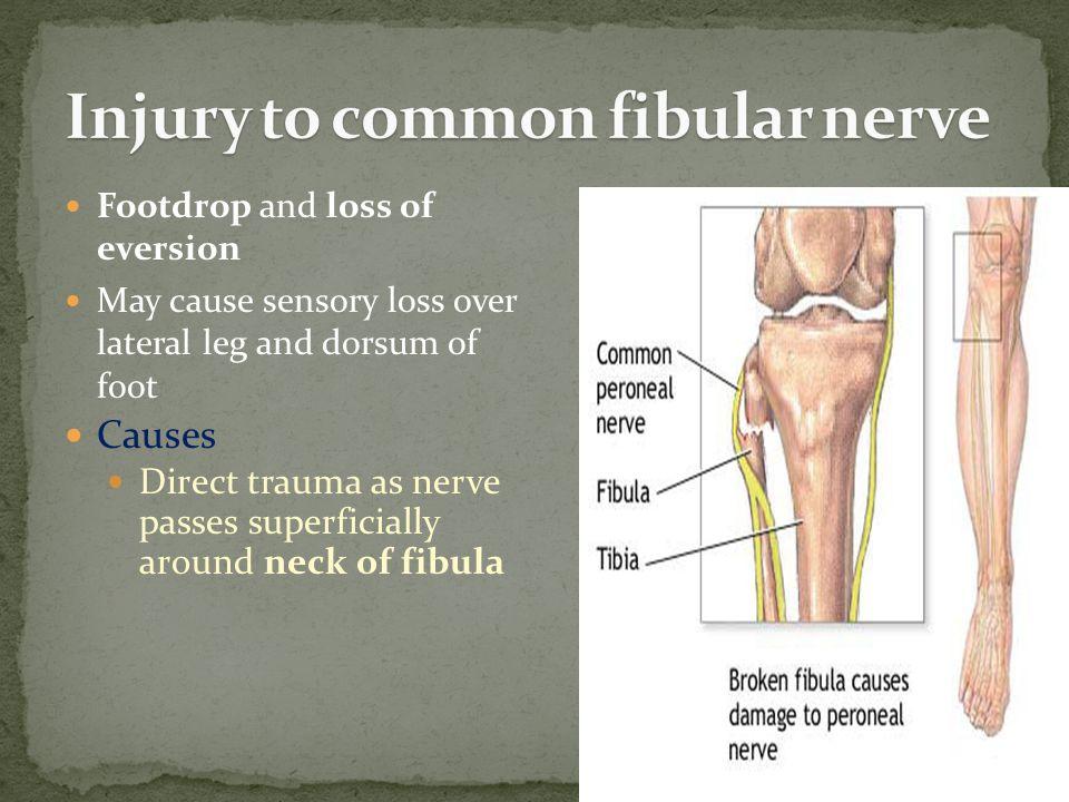 Injury to common fibular nerve