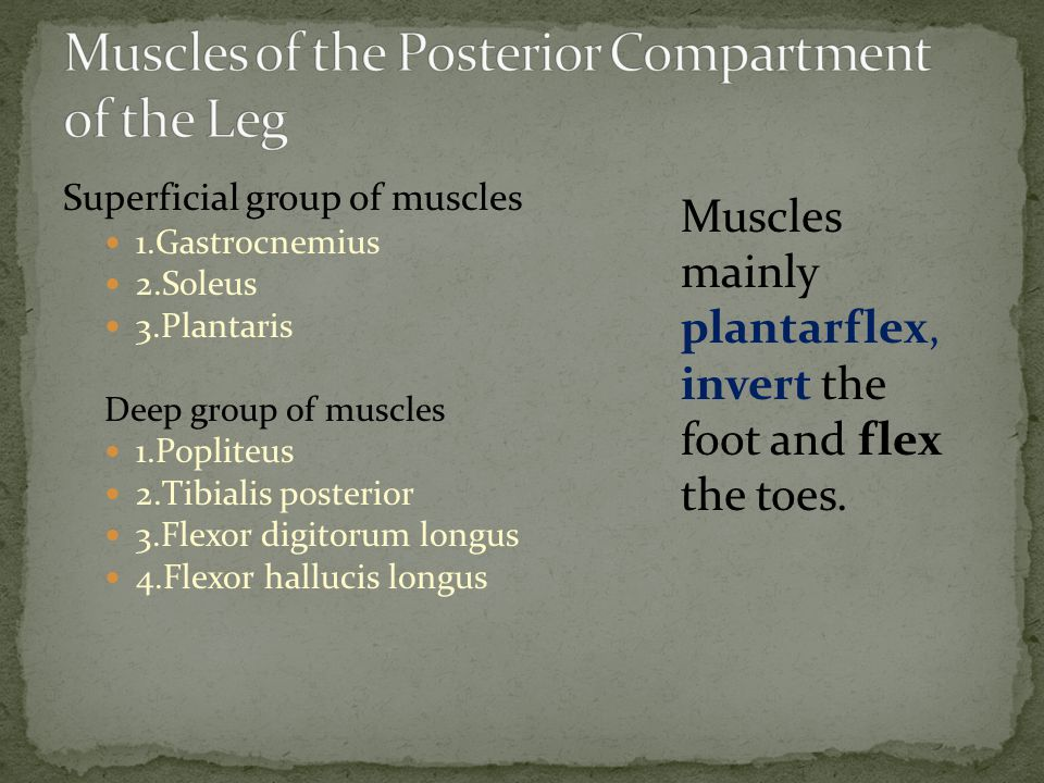 Muscles of the Posterior Compartment of the Leg