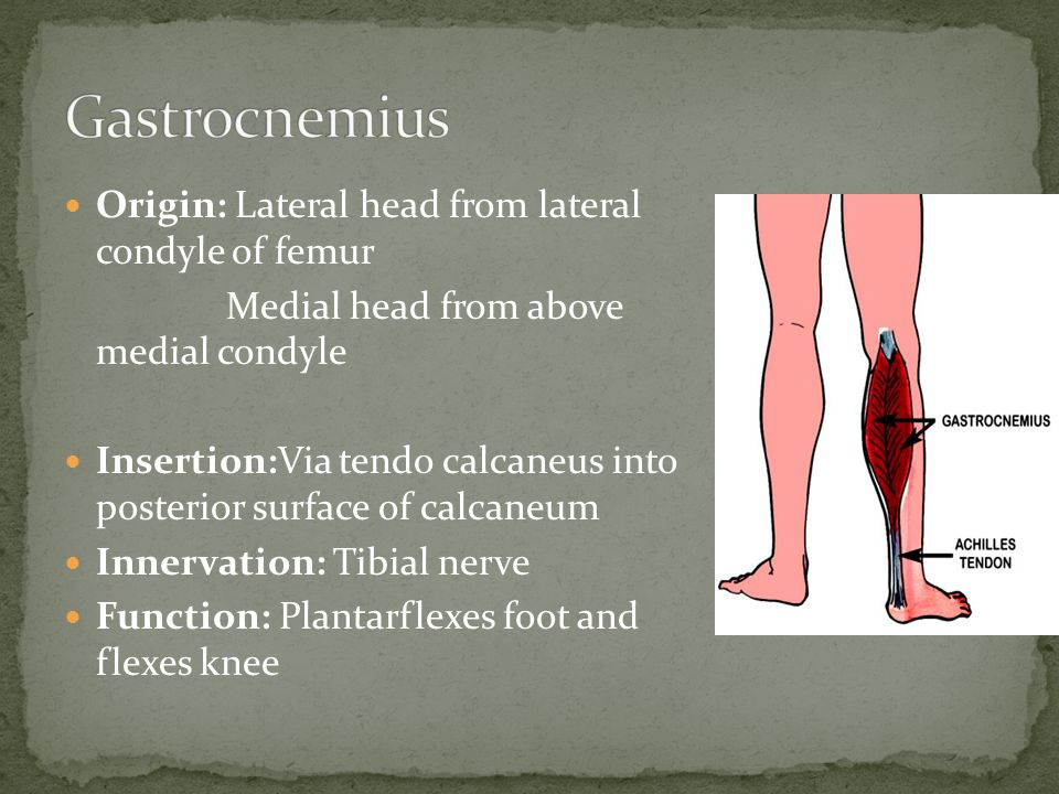 Gastrocnemius Origin: Lateral head from lateral condyle of femur