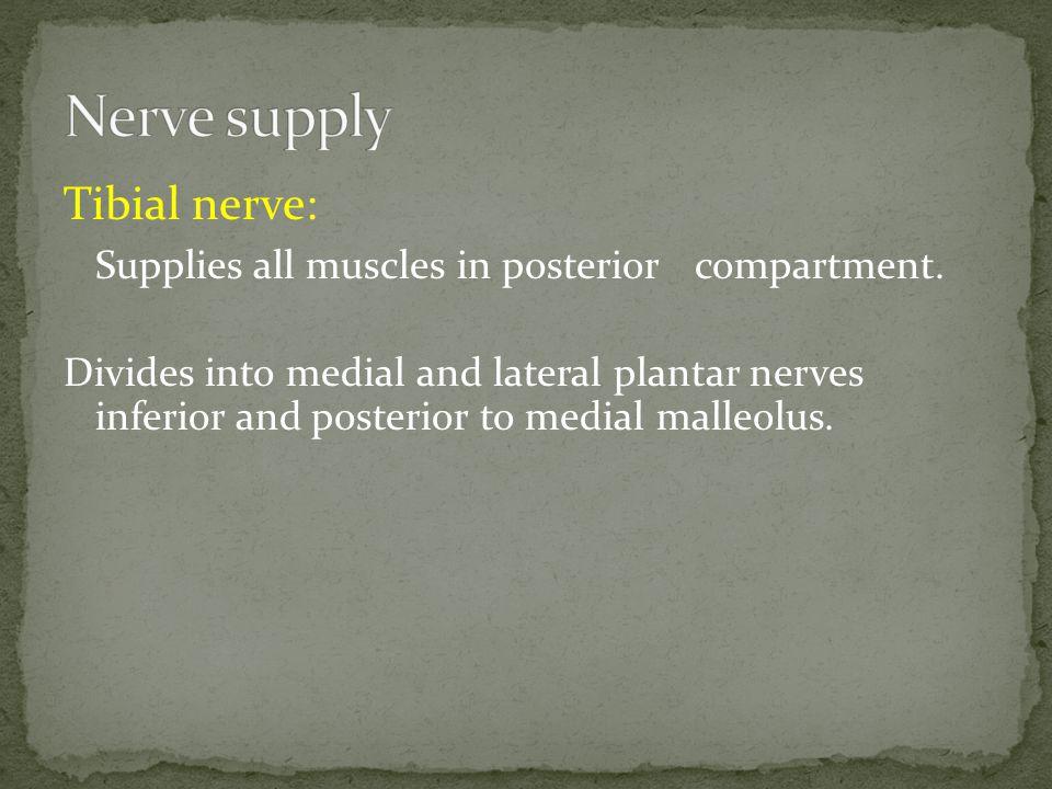 Nerve supply Tibial nerve: