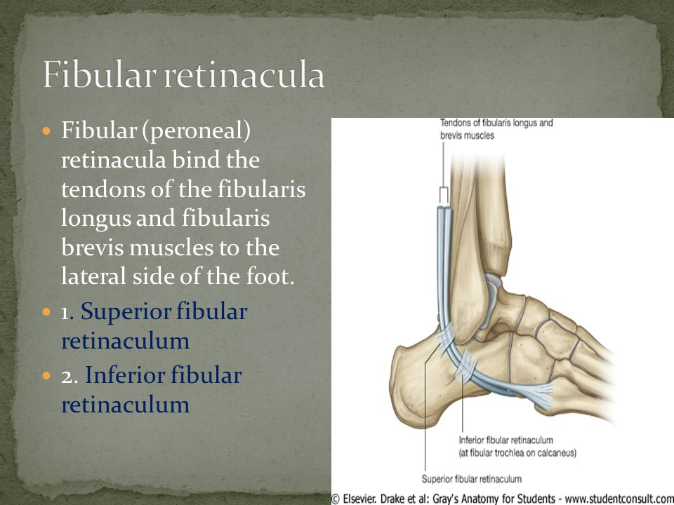 Fibular retinacula