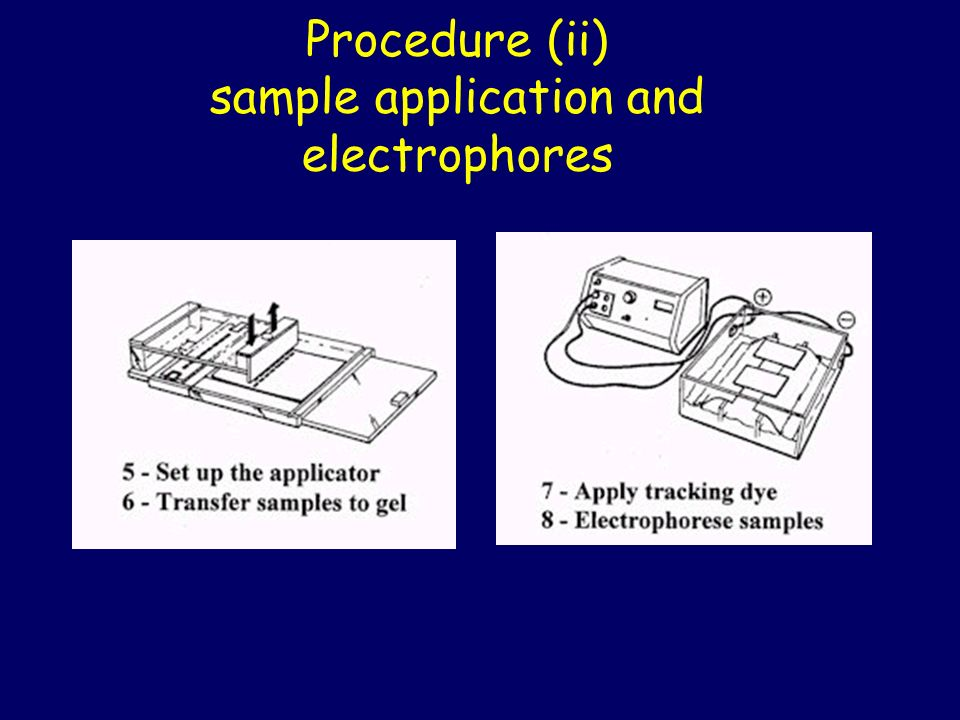 Procedure (ii) sample application and electrophores