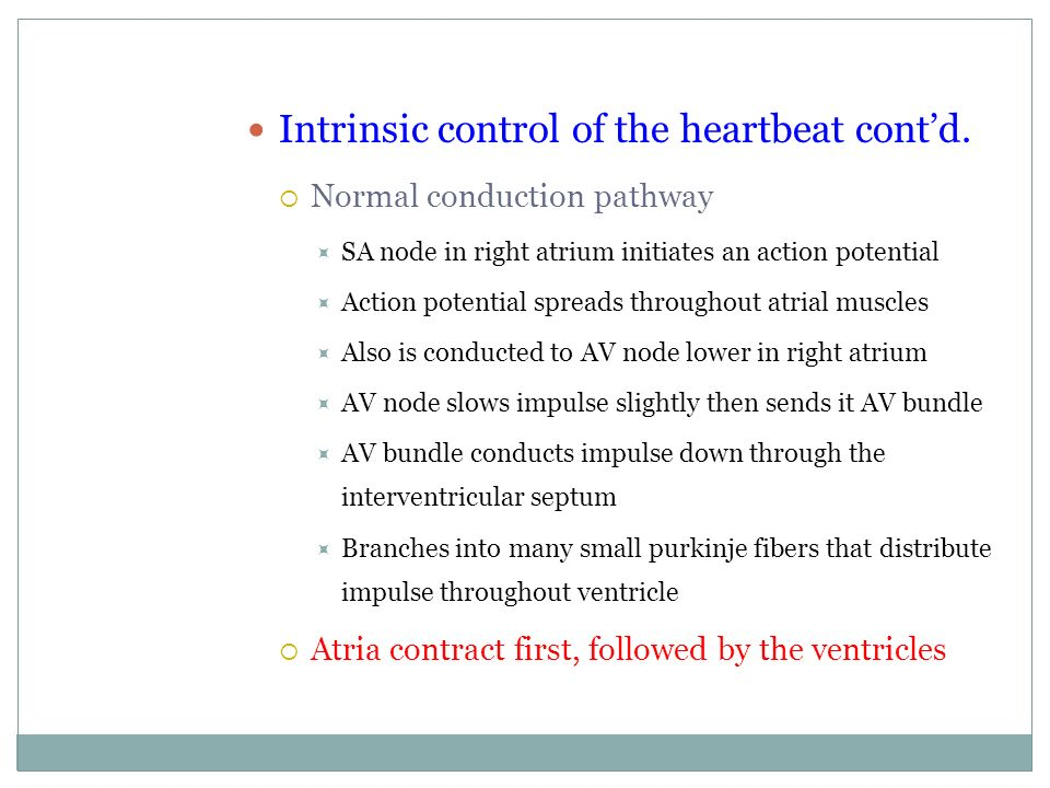 Intrinsic control of the heartbeat cont'd.