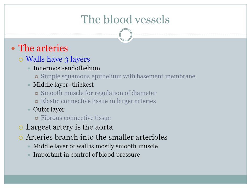 The blood vessels The arteries Walls have 3 layers