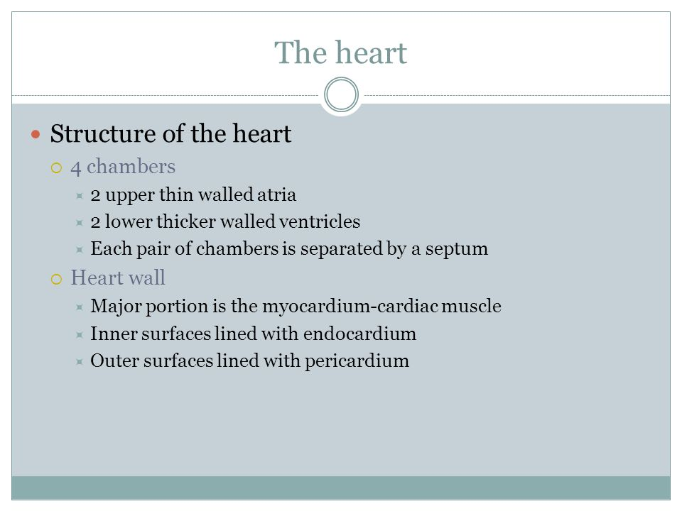 The heart Structure of the heart 4 chambers Heart wall