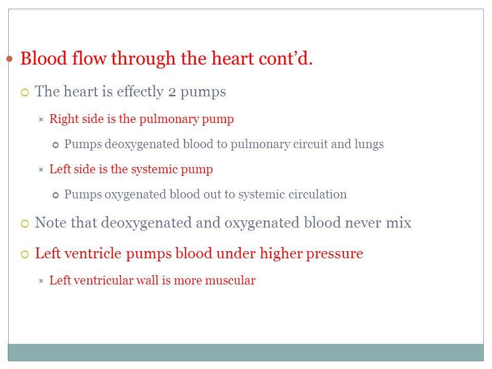 Blood flow through the heart cont'd.