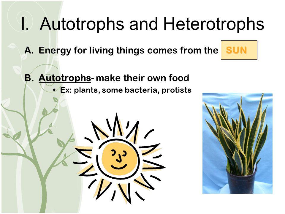 I. Autotrophs and Heterotrophs