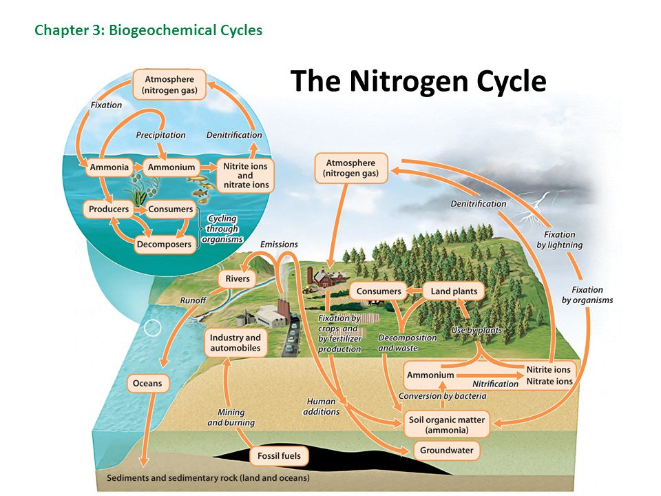 Chapter 3: Biogeochemical Cycles