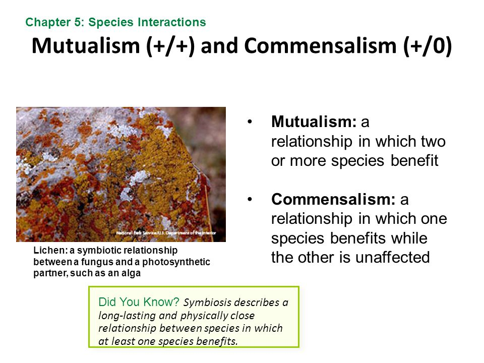 Mutualism (+/+) and Commensalism (+/0)