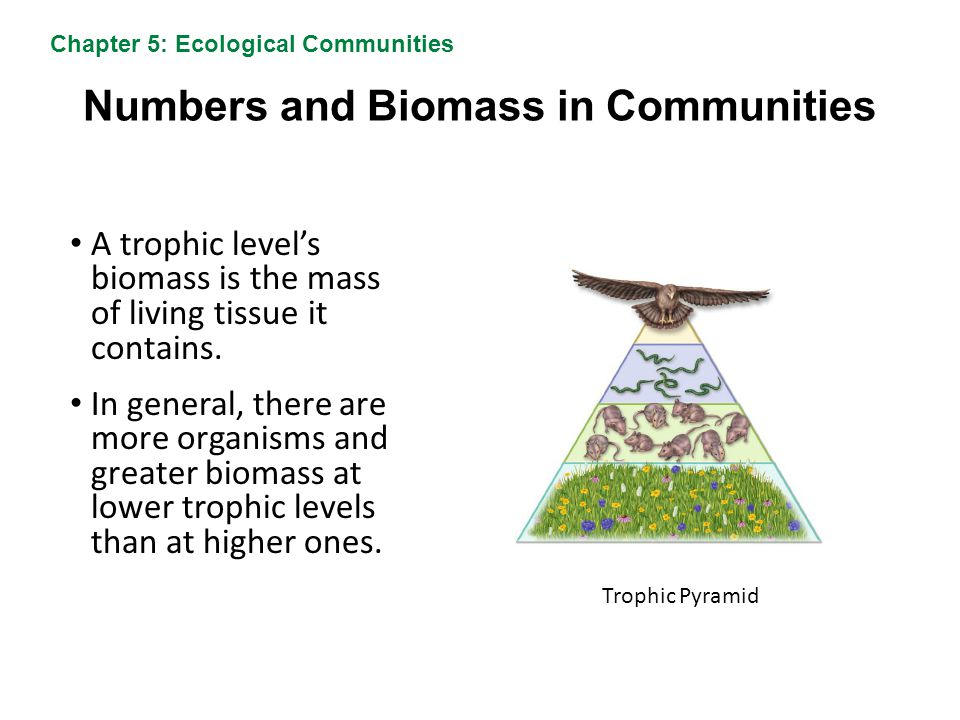 Numbers and Biomass in Communities