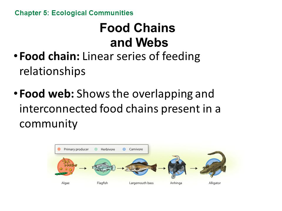 Food chain: Linear series of feeding relationships