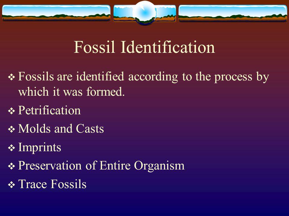 Fossil Identification