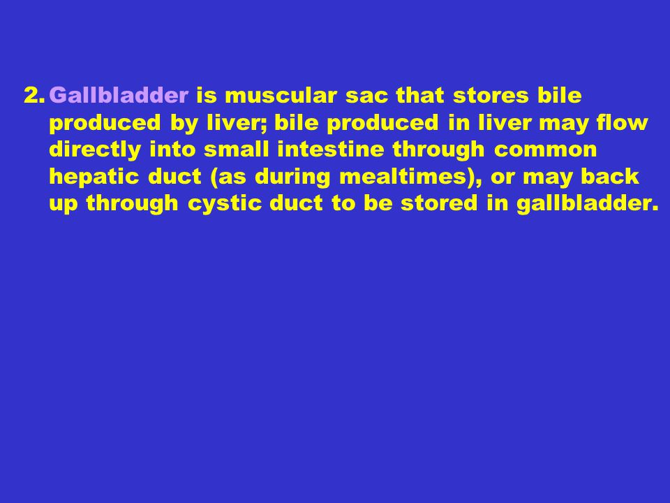 2. Gallbladder is muscular sac that stores bile produced by liver; bile produced in liver may flow directly into small intestine through common hepatic duct (as during mealtimes), or may back up through cystic duct to be stored in gallbladder.