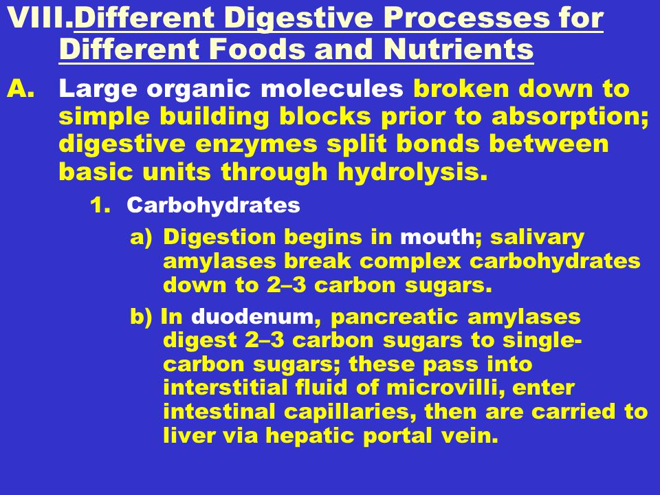 Different Digestive Processes for Different Foods and Nutrients