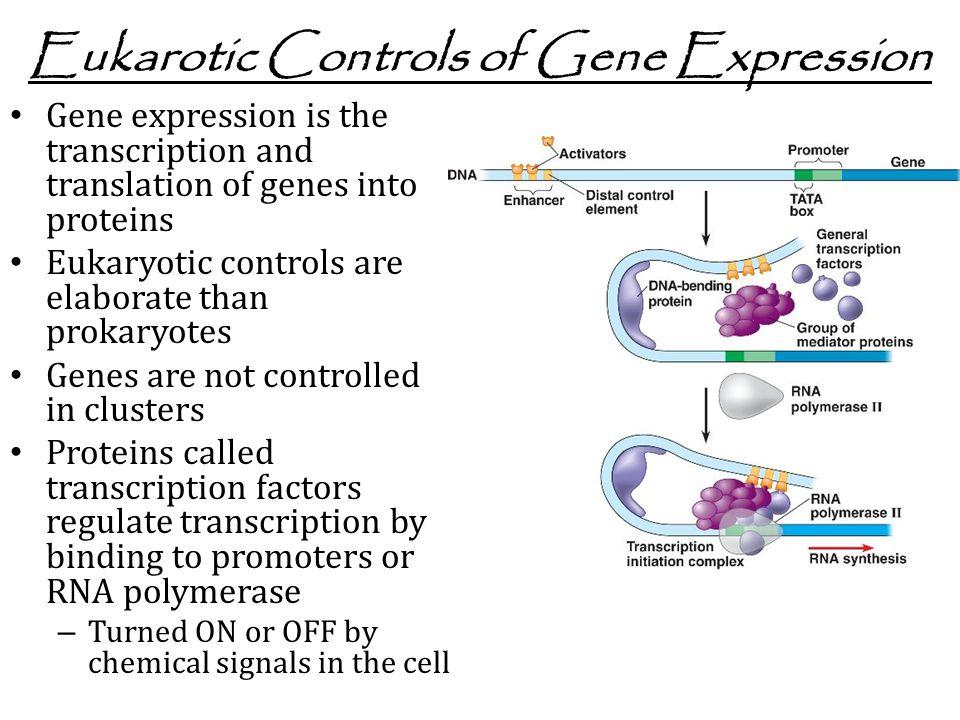 Eukarotic Controls of Gene Expression