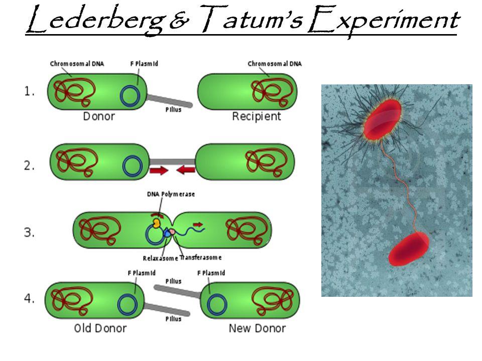 Lederberg & Tatum's Experiment
