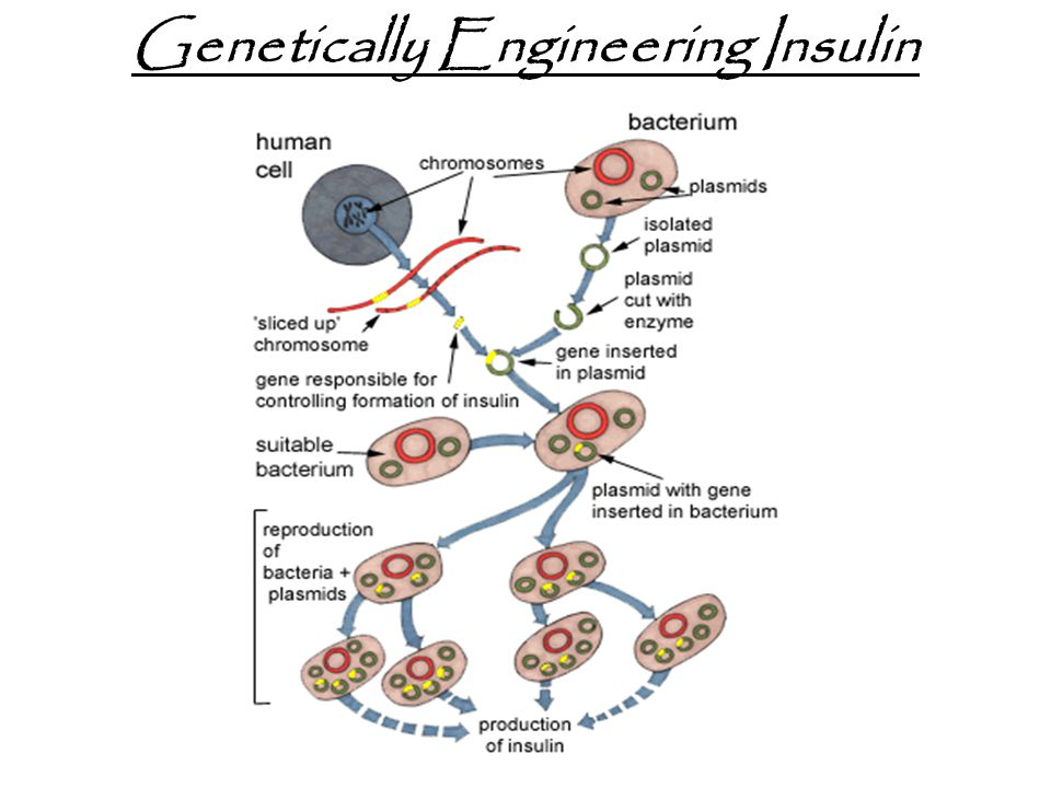 Genetically Engineering Insulin