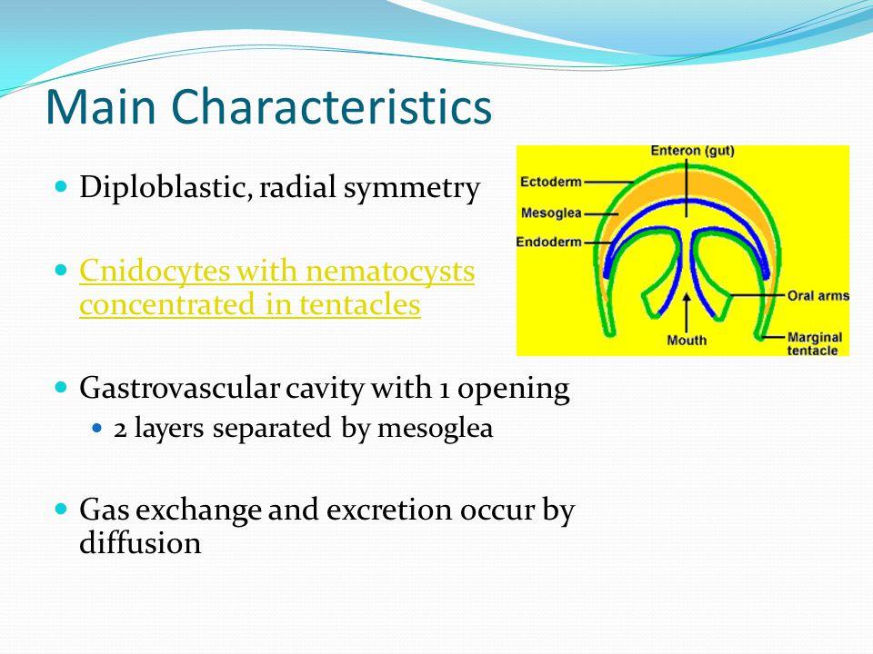 Main Characteristics Diploblastic, radial symmetry