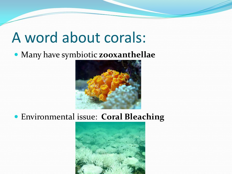 A word about corals: Many have symbiotic zooxanthellae