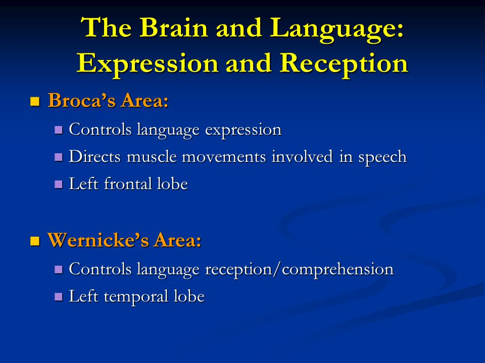 The Brain and Language: Expression and Reception