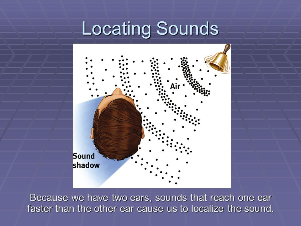 Locating Sounds Because we have two ears, sounds that reach one ear faster than the other ear cause us to localize the sound.