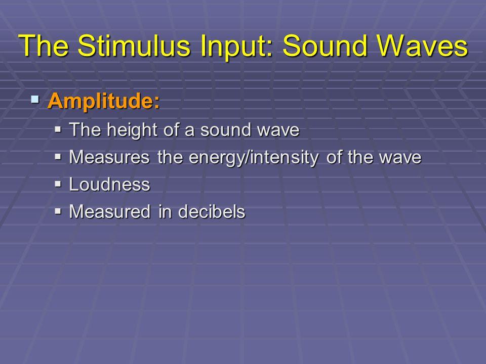 The Stimulus Input: Sound Waves