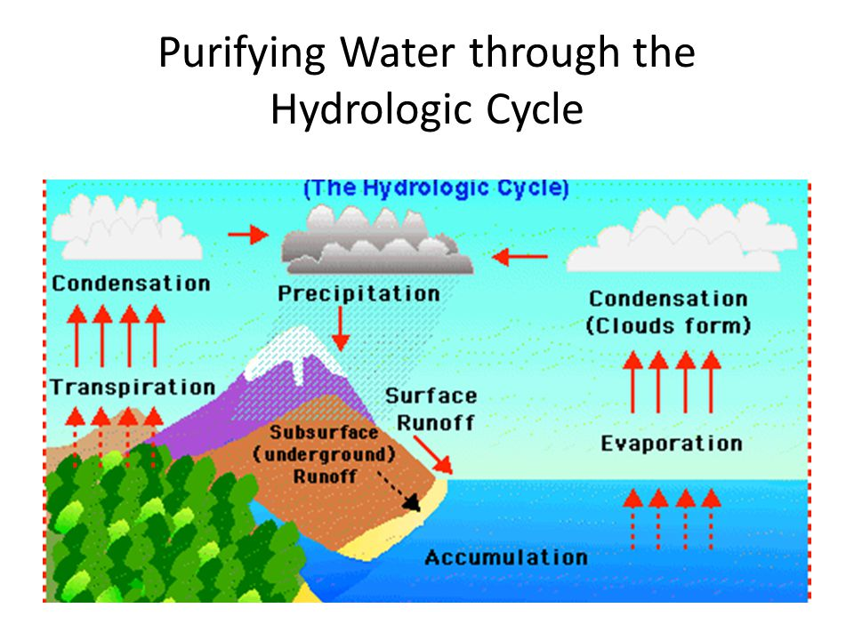 Purifying Water through the Hydrologic Cycle
