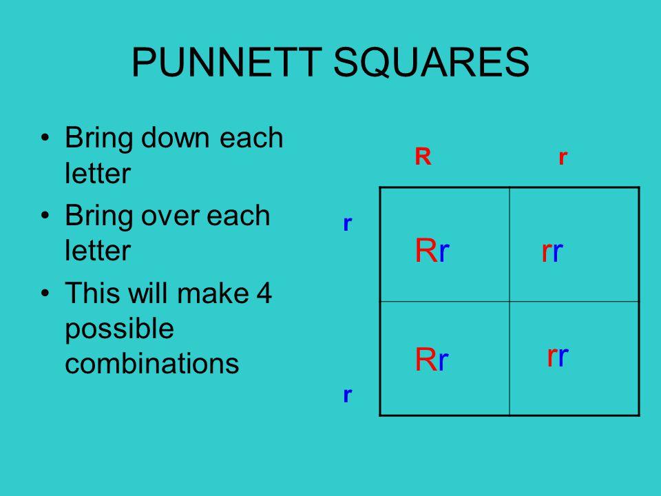 PUNNETT SQUARES Rr rr rr Rr Bring down each letter