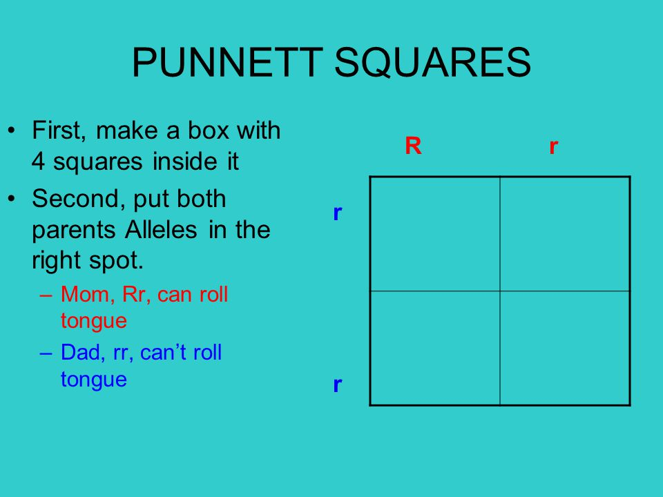 PUNNETT SQUARES First, make a box with 4 squares inside it