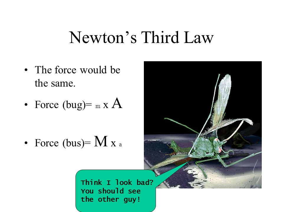 Newton's Third Law The force would be the same. Force (bug)= m x A