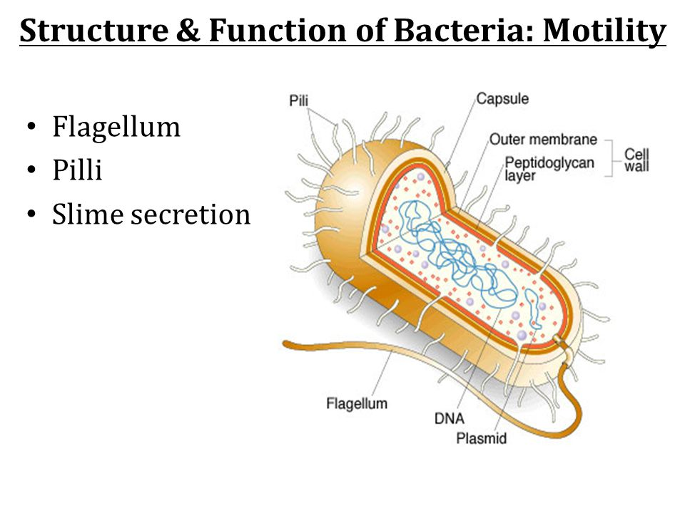 Structure & Function of Bacteria: Motility
