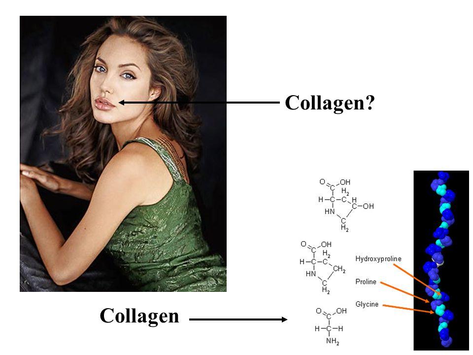 Collagen Collagen