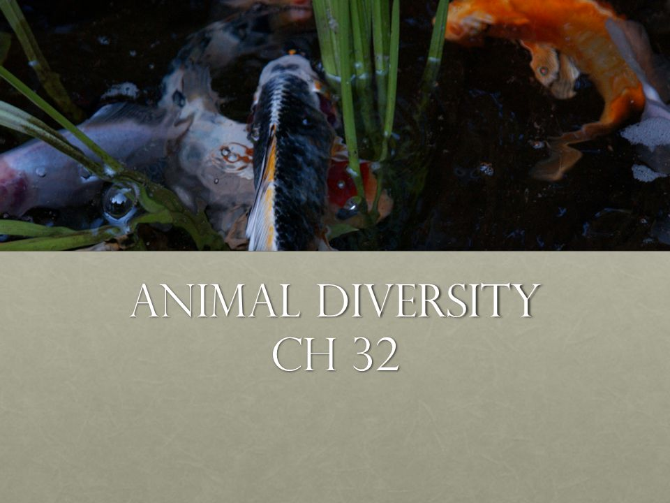 Animal diversity Ch 32