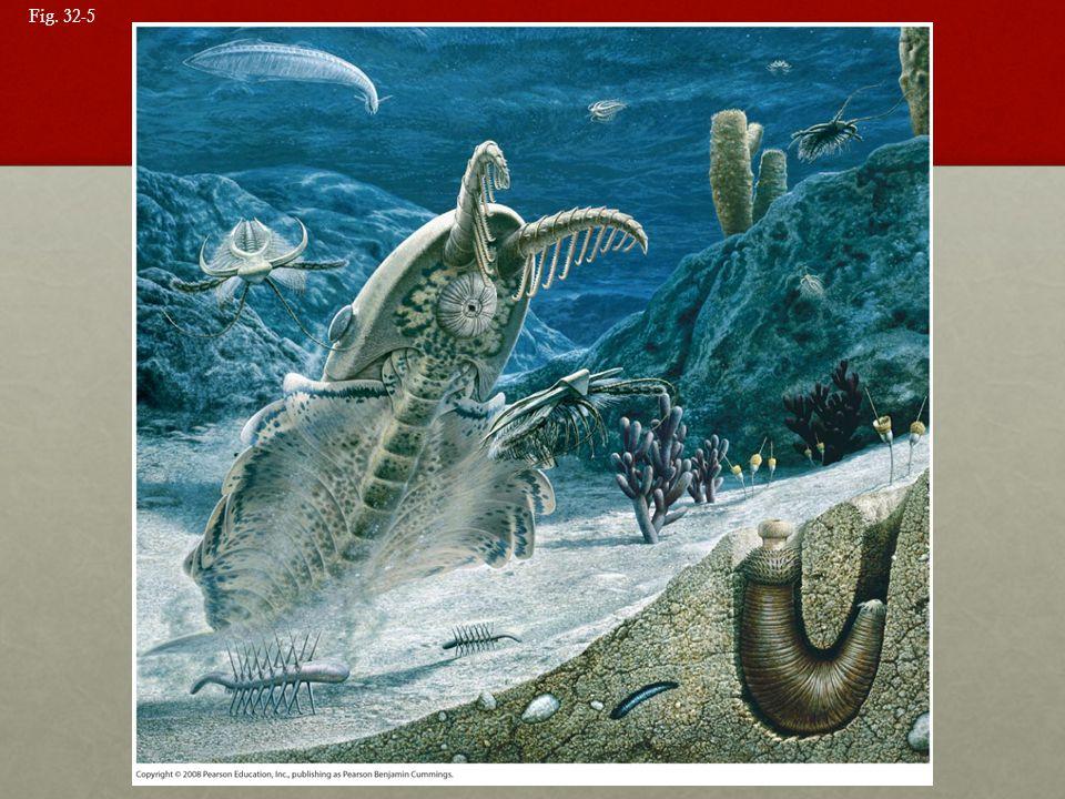 Fig. 32-5 Figure 32.5 A Cambrian seascape