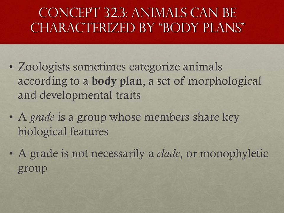 Concept 32.3: Animals can be characterized by body plans