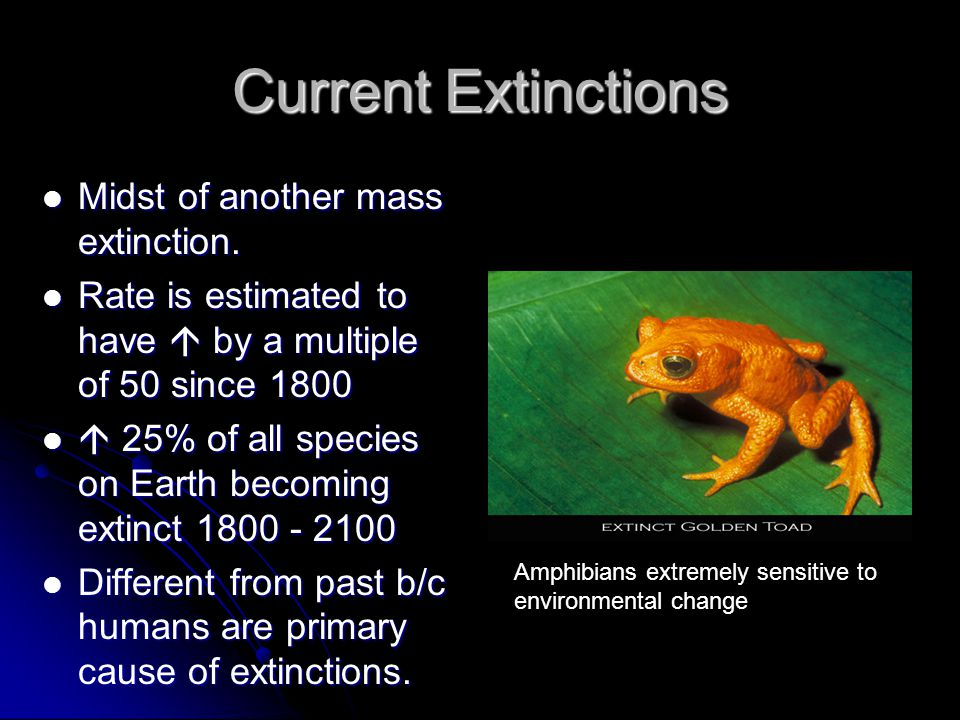 Current Extinctions Midst of another mass extinction.
