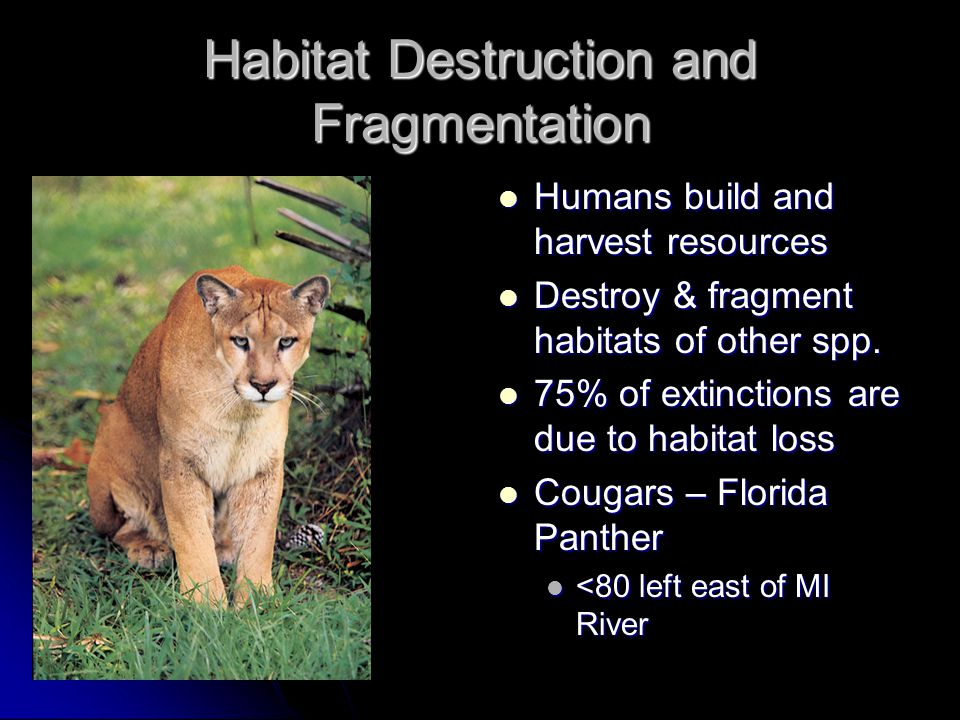 Habitat Destruction and Fragmentation