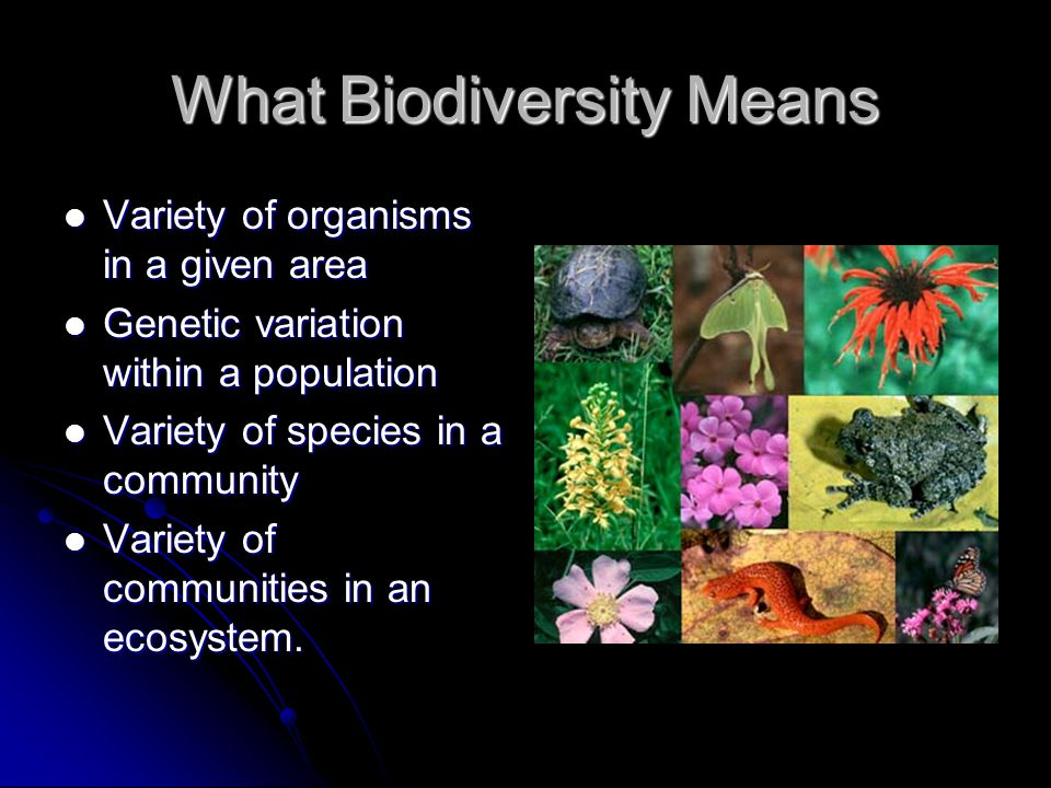 What Biodiversity Means